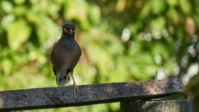 Pájaro que se sienta en la barra transversal Foto de archivo