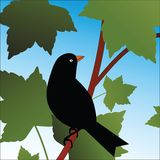 Pájaro que se sienta en la ramificación en árbol Imagen de archivo