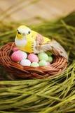 Pájaro que se sienta en una pequeña cesta Foto de archivo libre de regalías