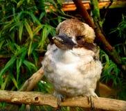 Pájaro que se sienta en una ramita y que le mira imagen de archivo