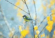 Pájaro que se sienta a finales de otoño en el parque en una rama de un BI Imagenes de archivo