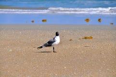 Pájaro que se sienta solamente en la playa Fotos de archivo