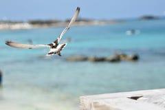 Pájaro que toma vuelo Imagen de archivo