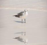 Pájaro que vadea Imagen de archivo libre de regalías