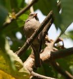 Pájaro que vive en Etiopía Fotos de archivo libres de regalías