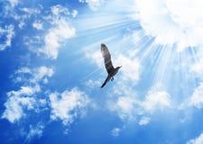 Pájaro que vuela al sol Foto de archivo libre de regalías