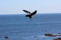Pájaro que vuela arriba Imagen de archivo libre de regalías