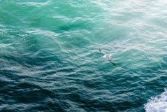 Pájaro que vuela sobre el mar en Islandia Fotografía de archivo