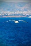 PÁJARO QUE VUELA SOBRE el Mar Negro imagen de archivo