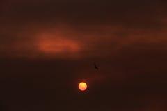 Pájaro que vuela sobre el sol Imagenes de archivo