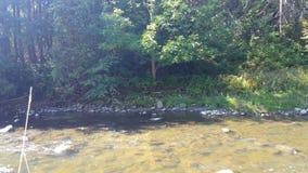 Pájaro raro de la garza que camina a lo largo de un río en verano almacen de video
