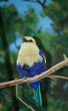Pájaro real imagen de archivo