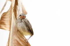 Pájaro recién nacido Fotografía de archivo