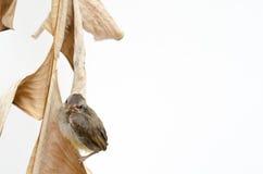 Pájaro recién nacido Fotos de archivo