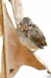 Pájaro recién nacido Imágenes de archivo libres de regalías