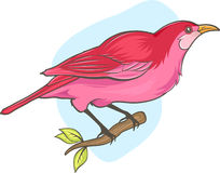 Pájaro rosado lindo Fotografía de archivo libre de regalías