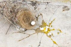 Pájaro roto, de los huevos está bajando de jerarquía con la cáscara de huevo y la yema de huevo del pájaro de los huevos en  imágenes de archivo libres de regalías