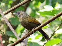 Pájaro salvaje Foto de archivo libre de regalías