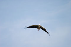 Pájaro salvaje Fotografía de archivo libre de regalías