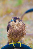 Pájaro salvaje Fotografía de archivo