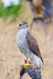 Pájaro salvaje Foto de archivo