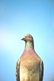 Pájaro salvaje Imagen de archivo libre de regalías