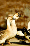 Pájaro salvaje Imagen de archivo