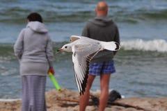 Pájaro salvaje Imagenes de archivo