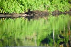 Pájaro salvaje en el río Fotos de archivo libres de regalías