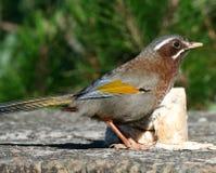 Pájaro salvaje en la tierra Foto de archivo