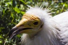 Pájaro salvaje en un parque zoológico fotografía de archivo libre de regalías