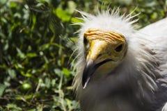 Pájaro salvaje peligroso en un parque zoológico foto de archivo
