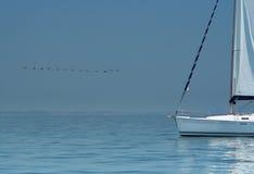Pájaro sobre el agua silenciosa y el yate blanco. Fotos de archivo