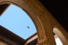 Pájaro sobre el La Alhambra Imágenes de archivo libres de regalías