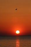 Pájaro sobre puesta del sol Imagenes de archivo