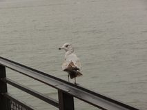 Pájaro solitario Fotos de archivo libres de regalías