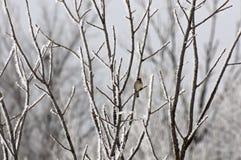 Pájaro solitario en árbol helado Foto de archivo