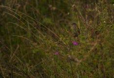 Pájaro solitario en un arbusto imagen de archivo