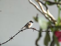Pájaro solo fotos de archivo