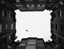 Pájaro solo Imagenes de archivo