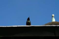 Pájaro solo Foto de archivo