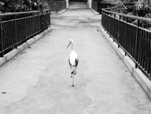 Pájaro solo Imágenes de archivo libres de regalías