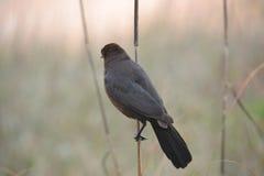 Pájaro solo marrón suave Imágenes de archivo libres de regalías