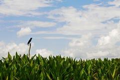 Pájaro solo que canta Fotografía de archivo