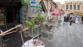 Pájaro Souq Doha
