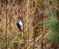 Pájaro suave en el Central Park - Nueva York, los E.E.U.U. de la pulsación de corriente Foto de archivo libre de regalías