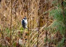 Pájaro suave en el Central Park - Nueva York, los E.E.U.U. de la pulsación de corriente Fotografía de archivo libre de regalías