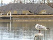 Pájaro suizo Fotografía de archivo libre de regalías