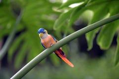 Pájaro tallado en tejido en el jardín Fotografía de archivo