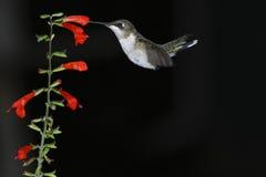 Pájaro temprano Imagenes de archivo